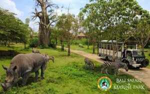 Bali Marine Safari Park Entrance Fee